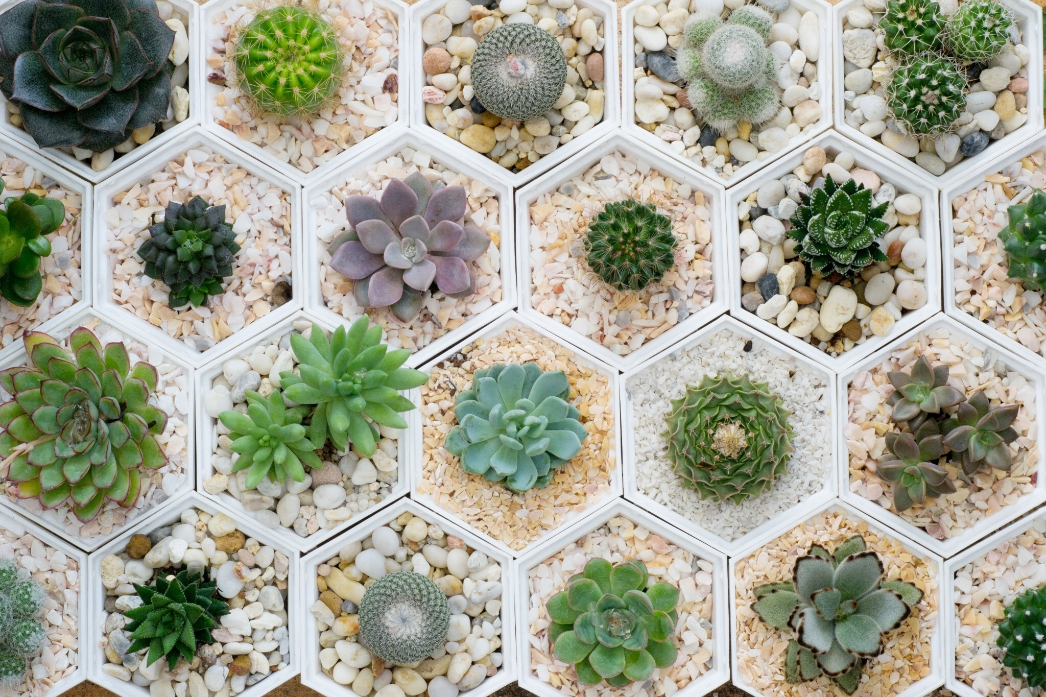 These 7 Awesome Succulent Subscription Boxes Get Two Green Thumbs Up