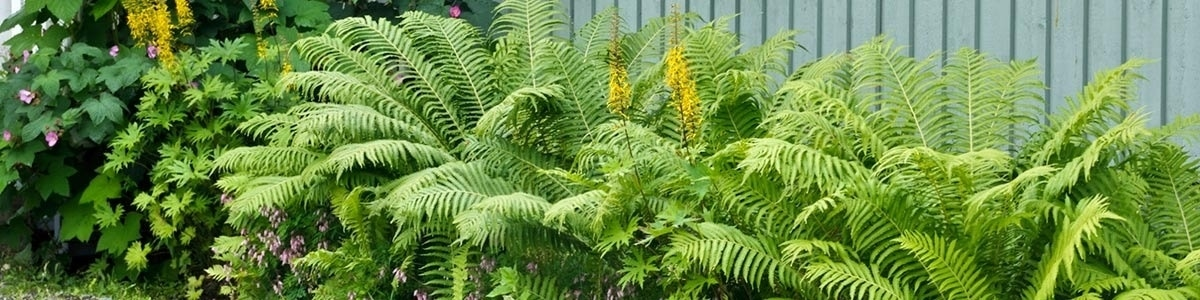 How to Improve Curb Appeal With Budget Friendly Ferns