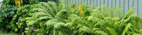 Article Image: How to Improve Curb Appeal With Budget Friendly Ferns