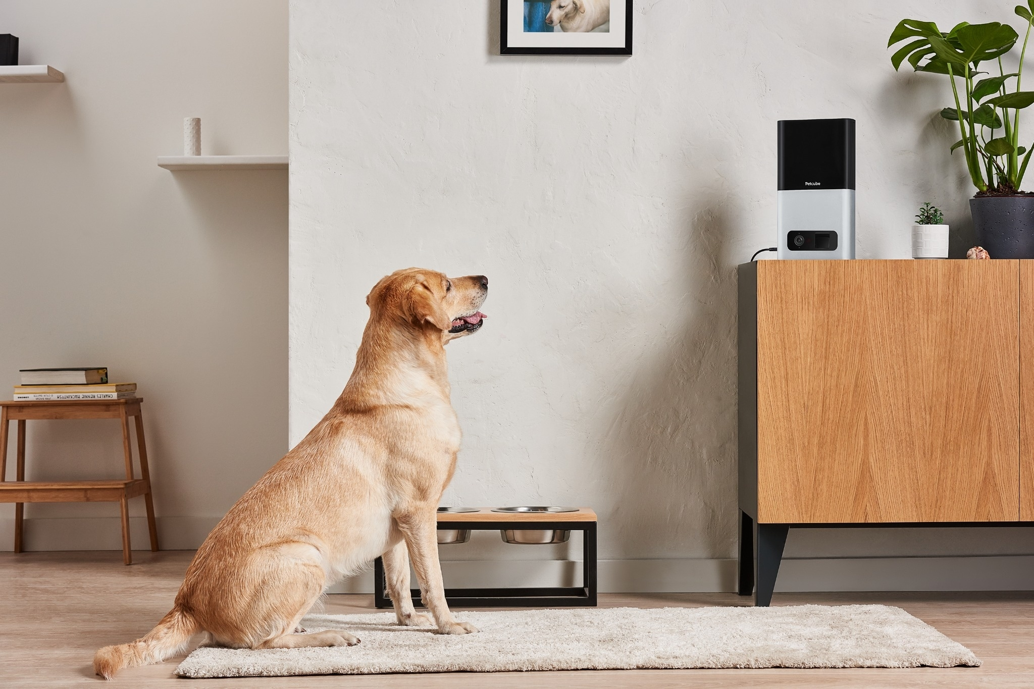 This Wifi Camera Lets You Feed And Play With Your Pet Via Mobile App