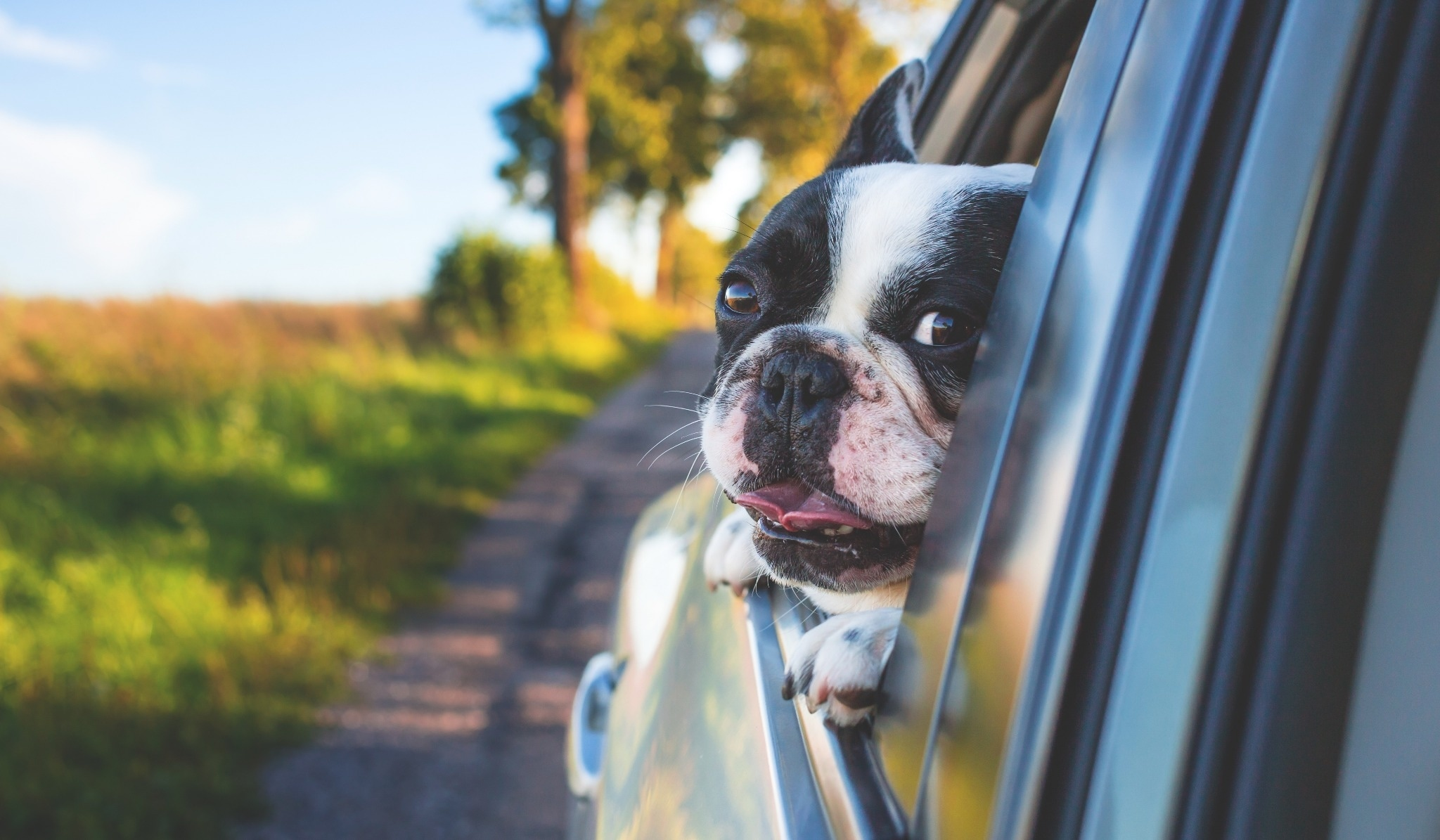 Traveling With Pets: The Complete Guide to Pets on Planes, Trains, and Automobiles (Plus Hotels & Airbnbs)