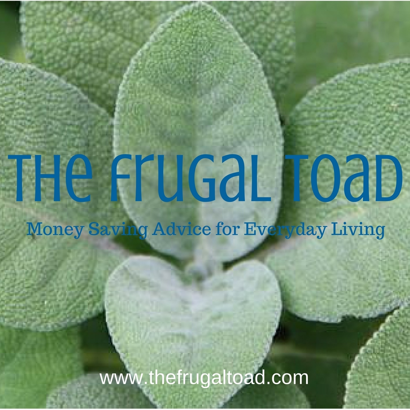 @thefrugaltoad profile image