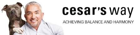 Cesar's Way promo codes