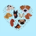 The Playful Pooch Boutique