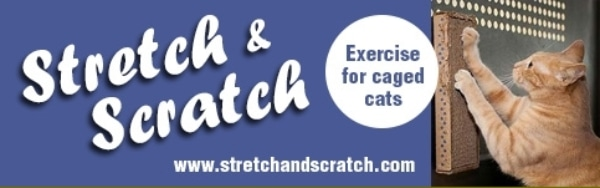 Stretch and Scratch Coupons & Promo codes