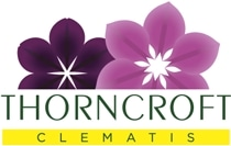 Thorncroft Clematis