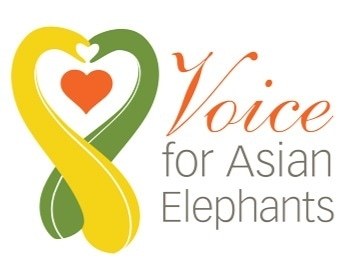 Voice For Asian Elephants