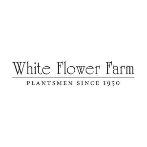 50 Off White Flower Farm Coupons 2019 Promo Code