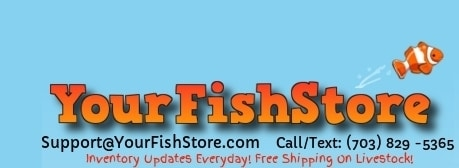 Your Fish Store promo codes